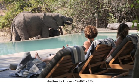 Elephant drinking at the pool of safari camp and luxury lodge in Kruger National Park, Timabavati region in South Africa