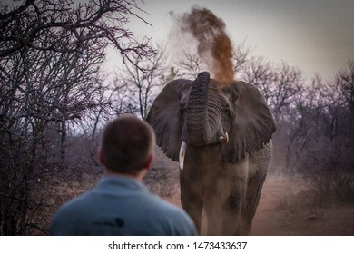 Elephant Encounter with a display in the African Bush