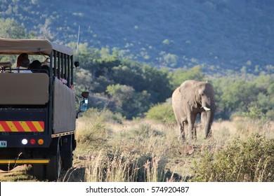 Rencontre d'éléphants sur un jeu Drive in Pilanesburg Game Reserve en Afrique du Sud
