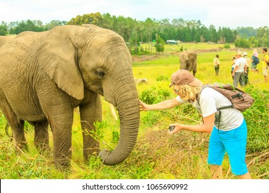 Elephant experience. Tourist man touchs and photograph an elephant in Plettenberg Bay, Western Cape on Garden Route, South Africa. Travel photographer interacting with Elephant. Big Five encountering.