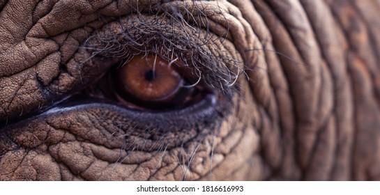 Elephant eye close up, wildlife