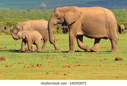 Elephant Family - 13
