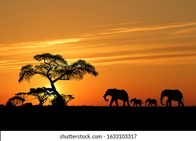An elephant family in an African landscape at sunset