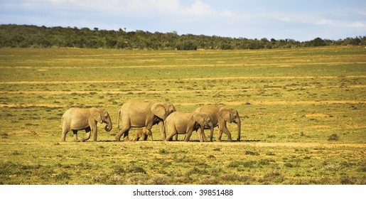 Elephant family with a baby