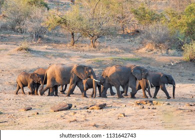 Elephant family in the Kruger National Park, South Africa
