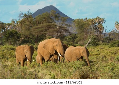 Elephant family (Loxodonta africana) in the Samburu National Park (Kenya)