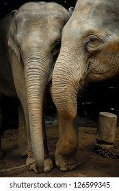 Elephant family in northern Thailand
