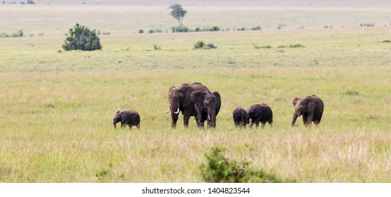 The elephant family on their way through the Kenyan savanna