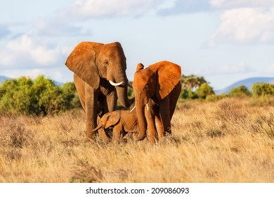 Elephant family in Samburu National Reserve, Kenya