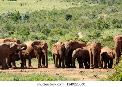 Elephant family standing together at the watering hole