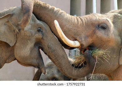 Elephant family take care of each other