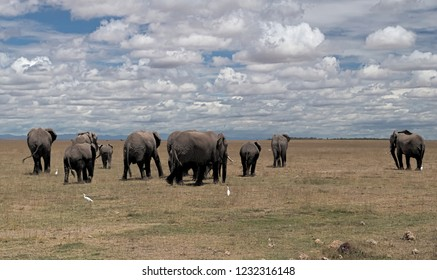 The elephant family. This herd of elephants has a matriarch, a couple of other mature females and several offspring.