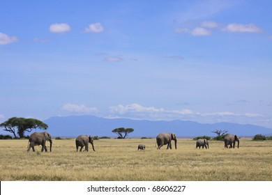 Elephant family walking in a line across the savanna
