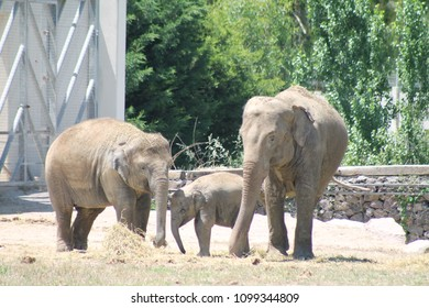 elephant family in the wildlife park