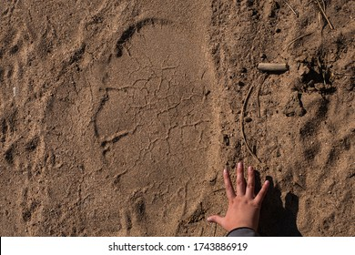 Elephant footprint compared to human hand to show how big is elephant footprin - wildlife photography