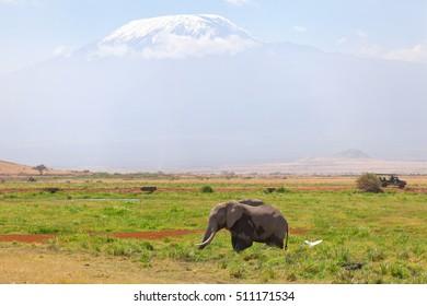 Elephant in front, Kilimanjaro at the background shot at Amboseli national park, Kenya