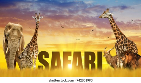 Elephant, giraffes, zebra and lion on the savannah at sunset. African safari wildlife animals.