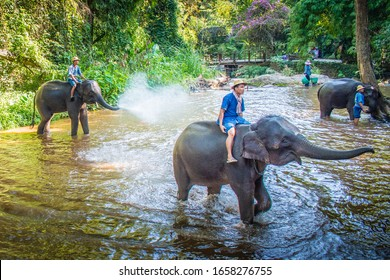 Elephant group and thier owner are playing with water in the river: Pang Chang Mae Sa, Chiang Mai, Thailand 18 December 2019