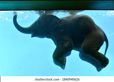 Elephant happiness under water show