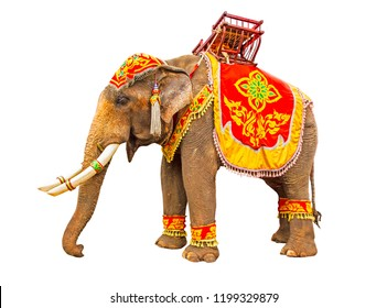 Elephant has beautiful and large isolated on white background. colorful painted elephant head ,Decorated elephants and tie wooden chairs in the back  in Thailand.