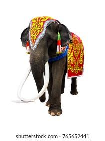 Royalty Free Elephant Festival Images Stock Photos Vectors