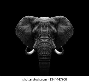 Elephant head- black and white Elephant