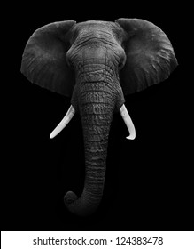 Elephant Head isolated