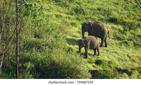 an elephant and her calf strolling in the periyar wildlife reserve.