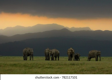 Elephant Herd at Corbett National Park