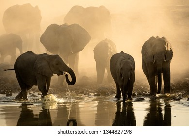 An Elephant herd heading towards a water hole in yellow dust.
