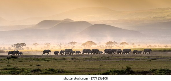 Elephant herd in savanna serengeti panoramic of wild life