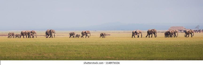 elephant herd side view