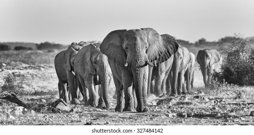 Elephant herd. Visible noise at 100%.