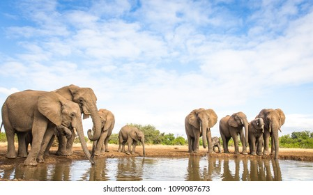 elephant herd at the water hole