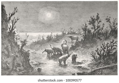 """Elephant herd at the Zondags River at moon night, drawn by J. Vanione in Emil Holub's """"Seven Years in South Africa"""", published in Vienna, 1881"""
