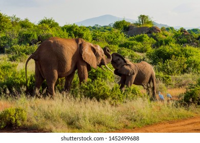 An elephant and his little. One in a walk in the savanna of the park Samburu in Kenya