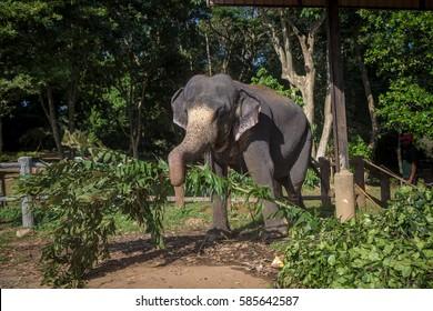 Elephant holding leaves