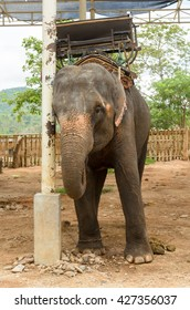 Elephant with howdah at elephants camp Ruammit Karen village,Chiang Rai for tourist trekking in jungle trail in Thailand - Shutterstock ID 427356037