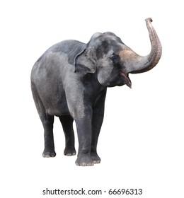 Elephant isolated against white background.