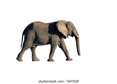 Elephant isolated on a white background