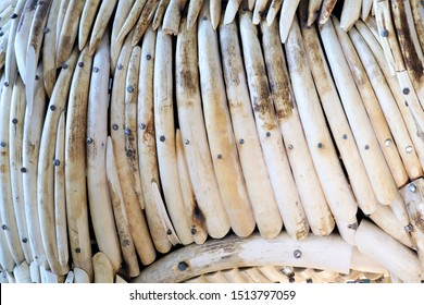 Elephant Ivory is a hard, white material from the tusks of Elephants that consists mainly of dentine, one of the physical structures of teeth and tusks.Trade of elephant ivory is illegal.