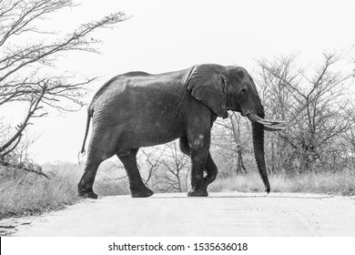 Elephant in the Kruger Nationalpark in South Africa