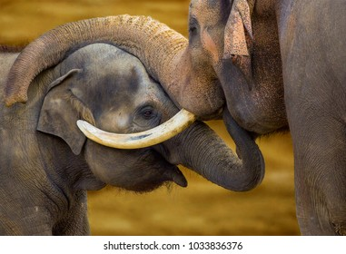 Elephant with a little elephant