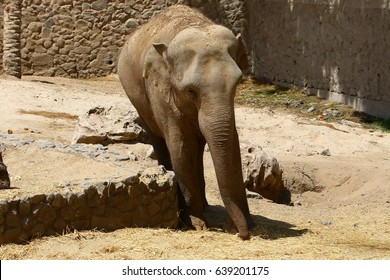 Elephant lives in the zoo