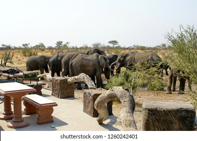 Elephant at a lodge in Botswana