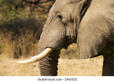 Elephant in lower zambezi national park