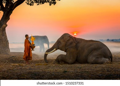 Elephant made merit a monk's bowl. Thai people and elephant jointly give alm to monk. elephant and Monk in forest. vintage style. The activities at Krapho, Tha Tum District, Surin, Thailand.