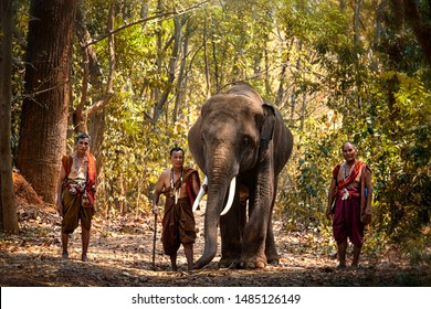 Elephant mahout portrait. The Kuy (Kui) People of Thailand. Elephant Ritual Making or Wild Elephant Catching. The mahout and the elephant at surin, Thailand.
