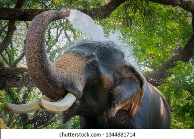 Elephant make water spray - shower,  Elephant Playing Shower in the River