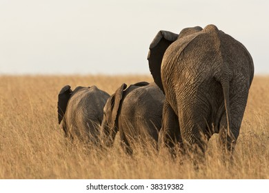 Elephant mother with babies in wild